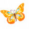 Butterfly-orange-icon.png